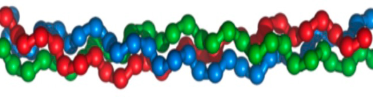 The triple helix of collagen I - composed of two alpha1 strands and one alpha2 strand