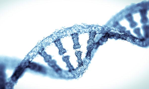 DNA agin mechanism